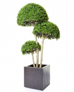 3 Half Ball Boxwood Tree Artificial 4 foot high